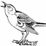 Profile picture of mockingbird
